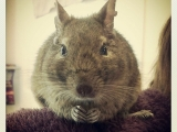 fluffy-mouse_cc-by-nc-nd_paul-hammerton