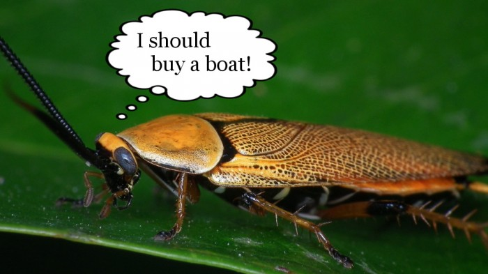 cockroach kakerlake i should buy a boat