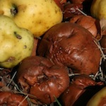 rotten-apples_cropped_150px_cc-by-nc_stephen-butler-copy