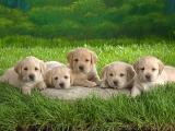 puppies_cc-by-sa_kitty.green66